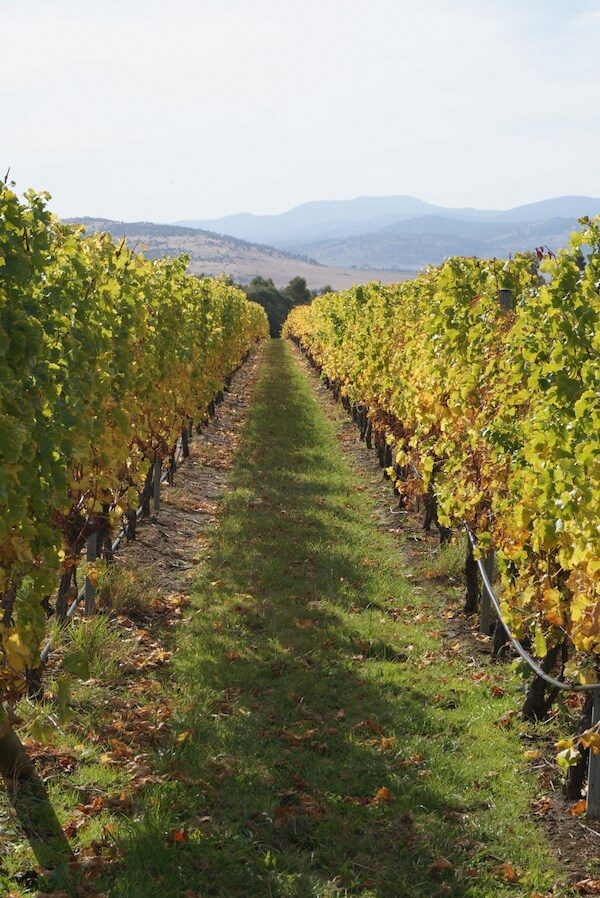 Frogmore Creek Vineyard near Hobart