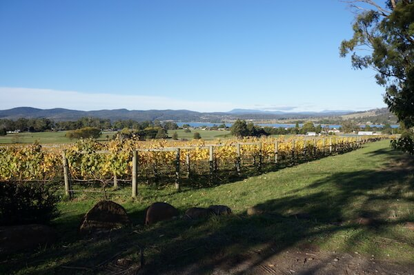 Stoney Rise Vineyard - Tamar Valley Tasmania