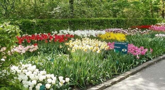 Tuliptrip: Mucho más que tulipanes