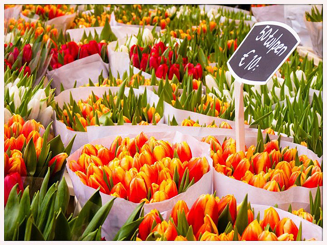 tulipanes640px
