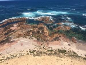 Sealion Colony South Australia