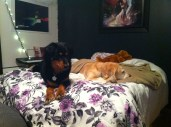 Tango and Honey come to visit