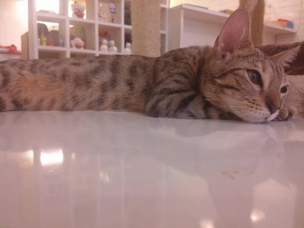 cat-cafe-penang