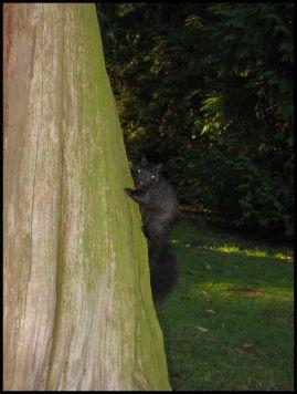 Vancouver Stanley Park squirrel