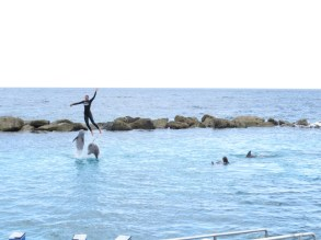 Animal cruelty can look a lot like fun. Riding dolphins.