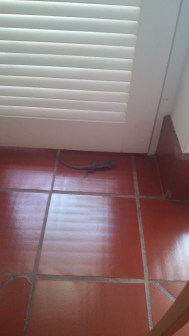 Lizards invading my Aruba villa