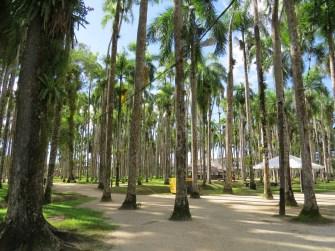Palm garden, Parbo