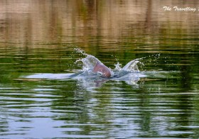 Dibru Saikhowa: Shooting River Dolphins