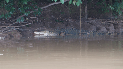 A croc. Swimming in the river not recommended.