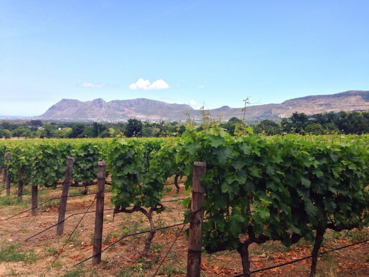 Cape-Winelands-Constantia-South-Africa-Cape-Town