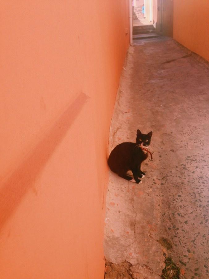 New blog idea: Cats of Cape Town
