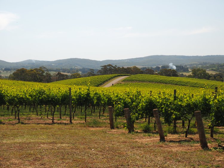 nepenthe-adelaide-hills-south-australia