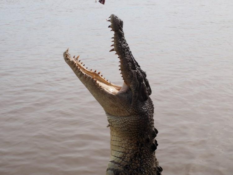 adelaide-river-crocodile-darwin
