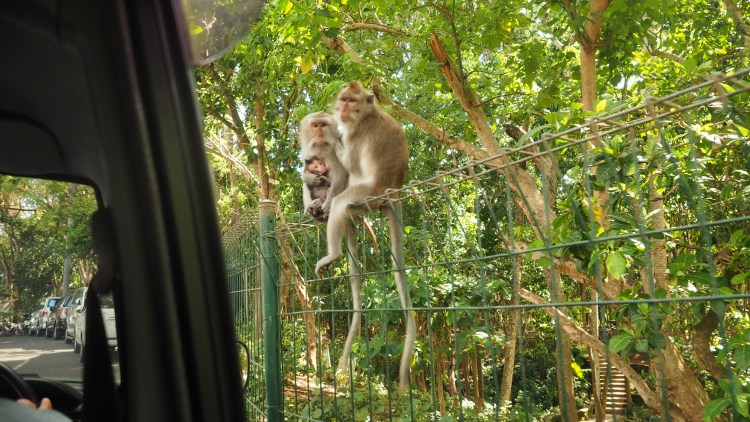 bali-ubud-indonesia-monkey