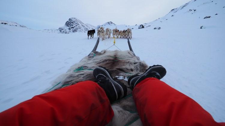 sisimiut-greenland-dog-sled