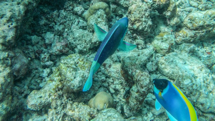 maldives-travel-blog-soneva-fushi-underwater-snorkelling