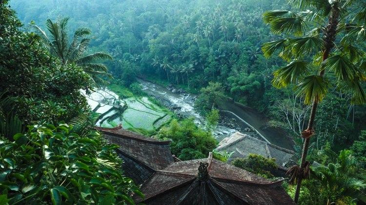bali-ubud-travel-blog-jungle-retreat-kupu-kupu-barong-luxury-backpacking-solo-rice-fields