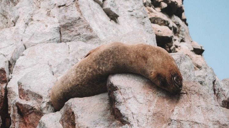 paracas-islas-ballestas-travel-blog-peru-backpacking-travelling-the-world-solo