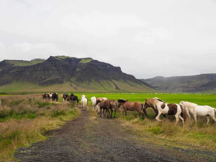 west-iceland-travel-blog-ring-road-self-drive-solo-female-travelling-the-world