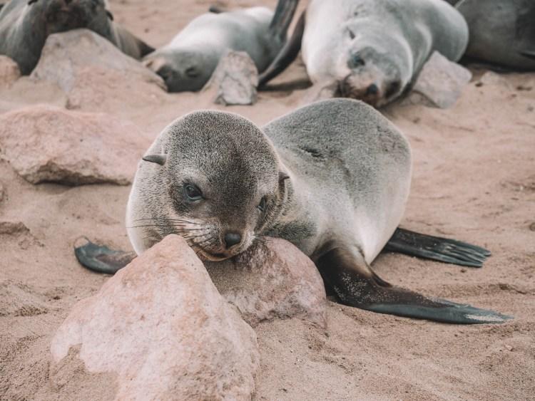 cape-cross-skeleton-coast-swakopmund-travel-blog-namibia-road-trip-self-drive-backpacking-travelling-the-world-solo