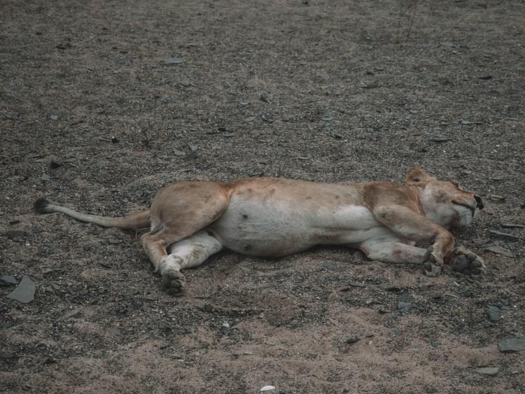 azura-selous-safari-tanzania-travel-blog-backpacking-travelling-the-world-solo