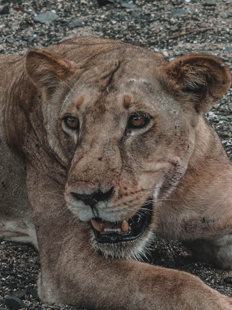 azura-selous-safari-tanzania-travel-blog-namibia-road-trip-self-drive-backpacking-travelling-the-world-solo