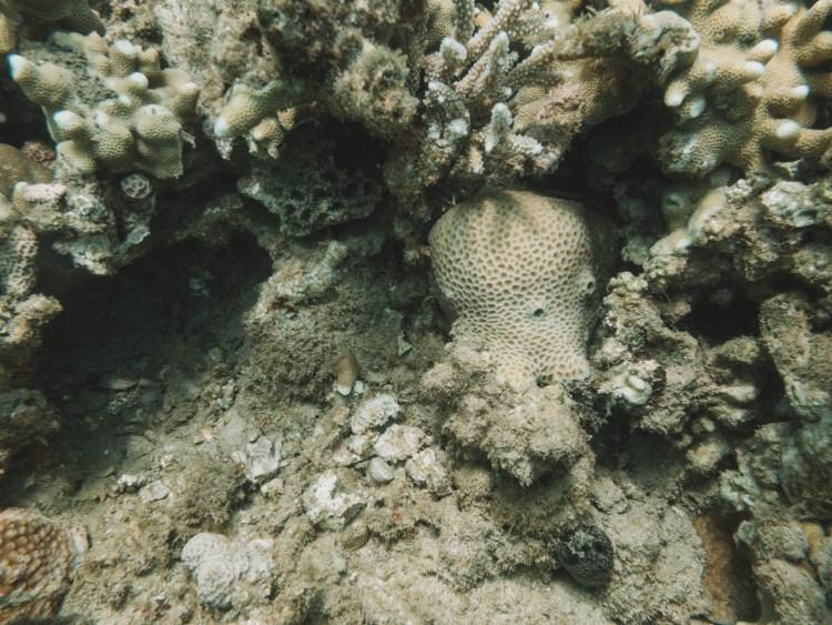 comoros-moheli-travel-blog-laka-lodge-scuba-diving-backpacking-travelling-the-world-solo