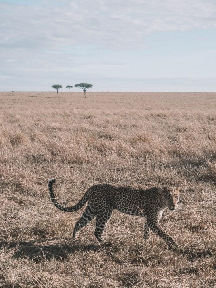 cottars-maasai-mara-blog-travel-1920s-camp-travelling-the-world-solo-safari-kenya