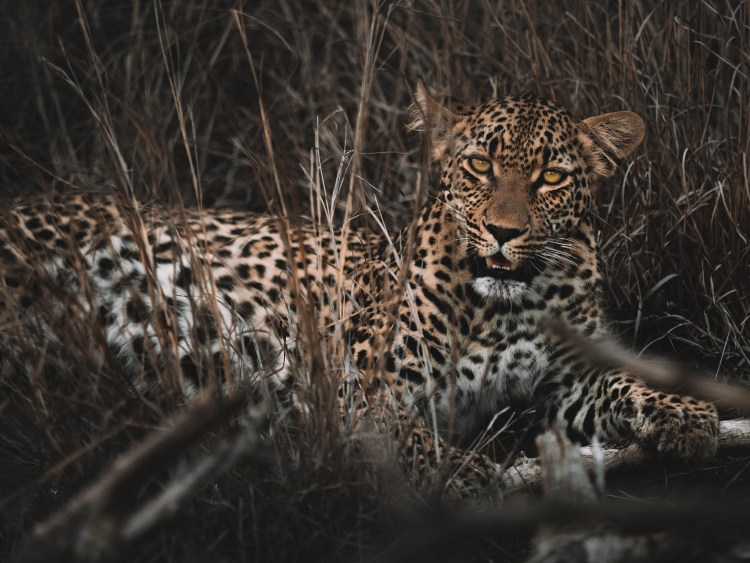 Cheetah-Plains-Travel-Blog-Sabi-Sands-South-Africa-Safari-Luxury