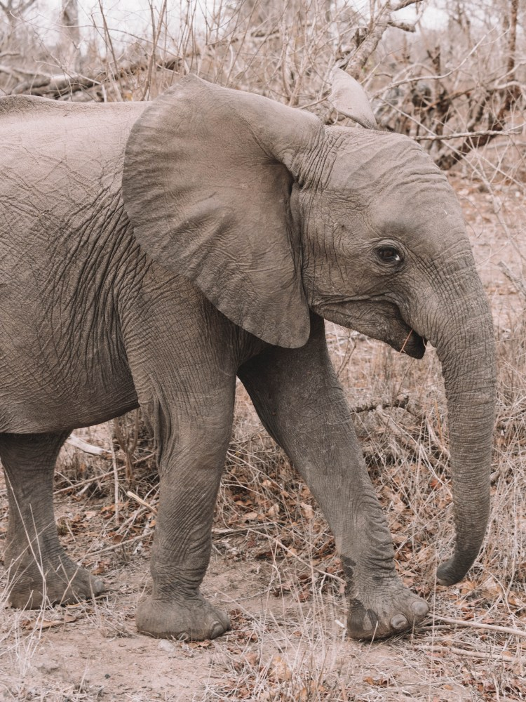 Cheetah-Plains-Travel-Blog-Sabi-Sands-South-Africa-Safari-Luxury