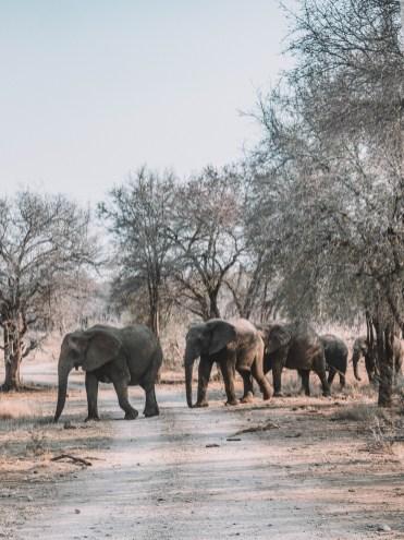 Jaci's Safari Lodge, South Africa