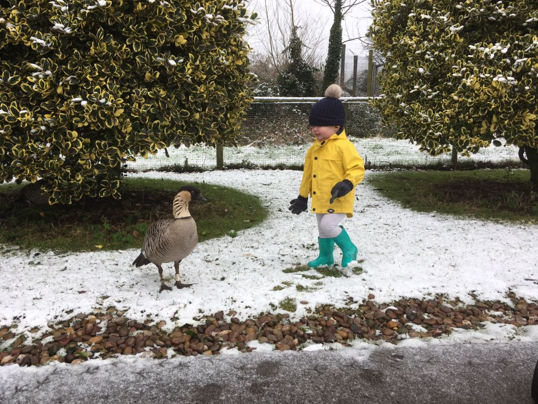 Dexter and a goose stood on the snow in Martin Mere