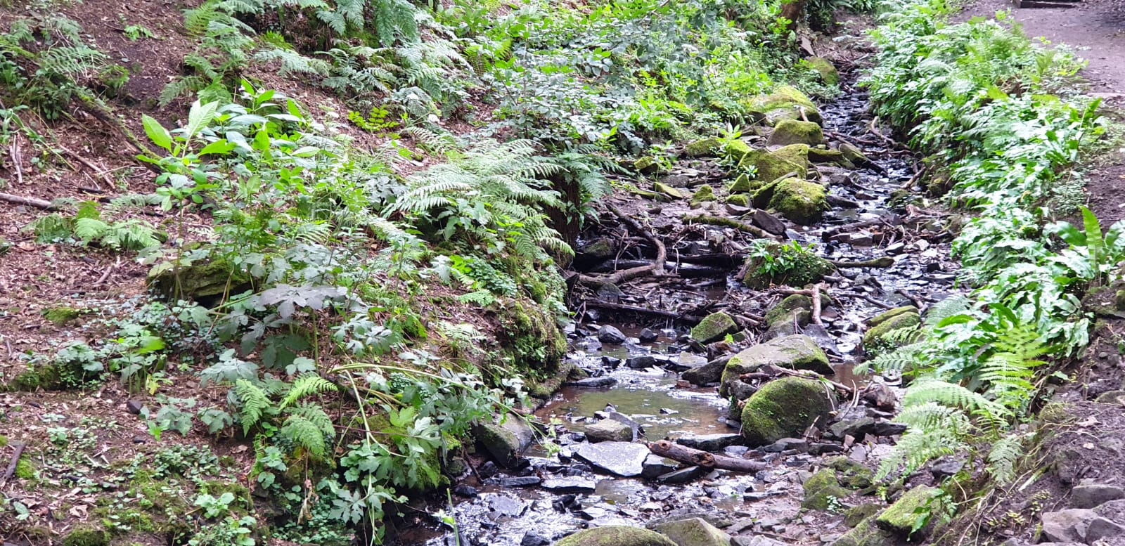 A stream running alongside a path in Fairy Glen, Parbold