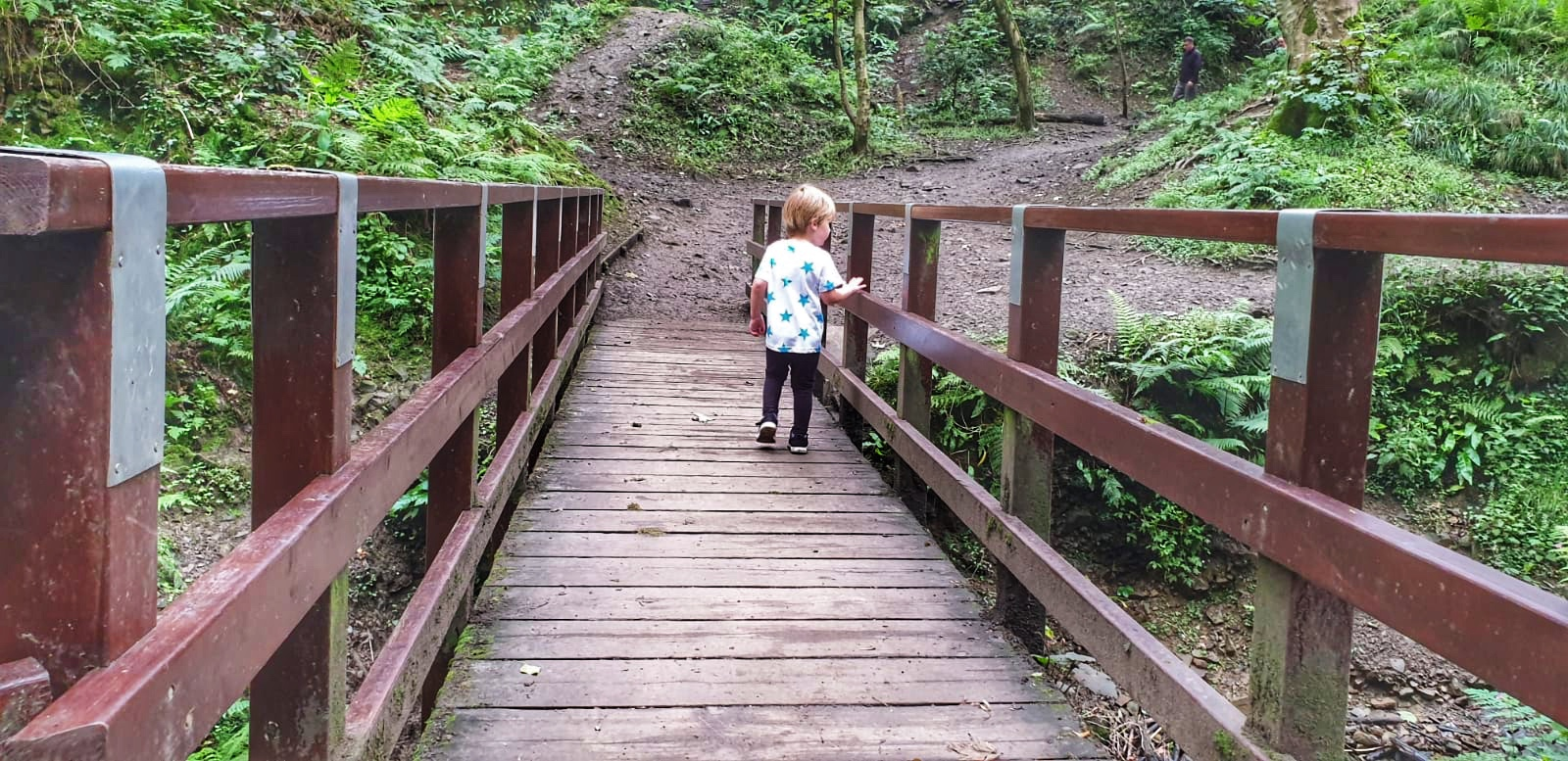 Dexter walking along a bridge in Fairy Glen, Parbold