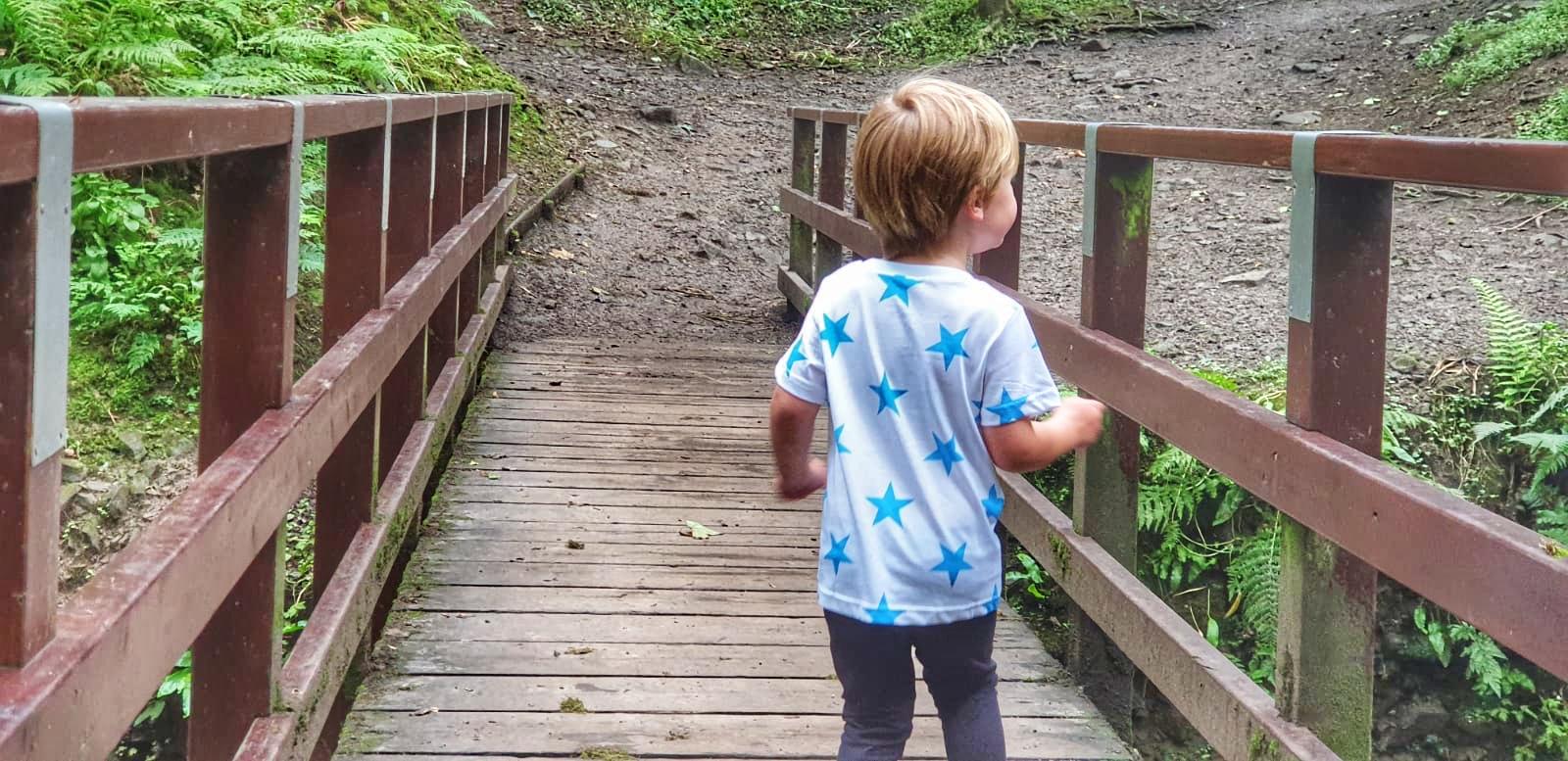 Dexter walking on a bridge in Fairy Glen, Parbold