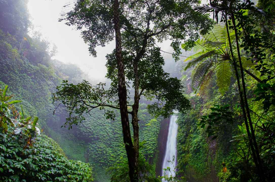 nature forest waterfall jungle