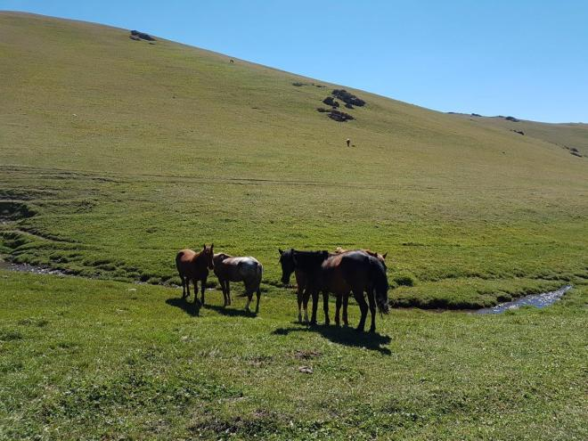 Horses enjoying the summer in the mountains. Three day horse-riding trip to Song Kul, Kyrgyzstan.