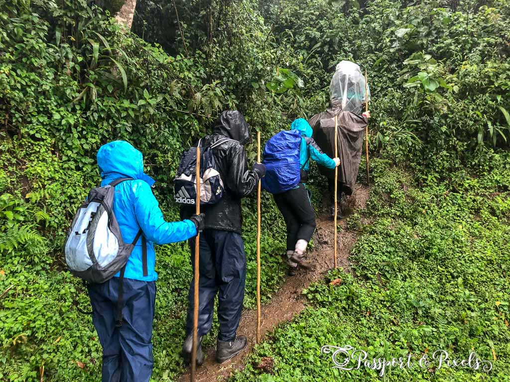 For every step, you slide back two... Gorilla trekking in Bwindi. Ruhija, Uganda.