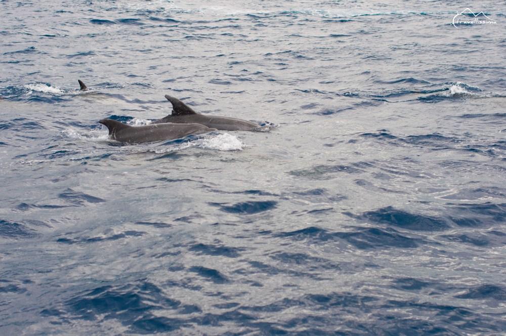 Azores_Anna_Kedzierska_Travellissima-0744