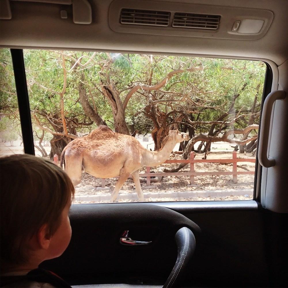 Rodzinne wakacje w Omanie z dzieckiem