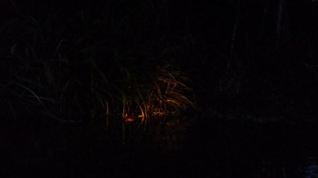 P1020041 - Croc in Swamp