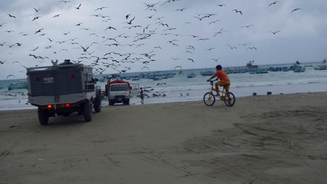 P1020743 Birds, Boats, Fish, Puerto Lopez