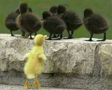 Chicks - One Different