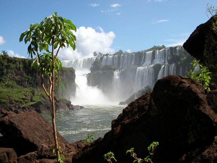 Argentina (124) Iguazu 2 Layersw Tree