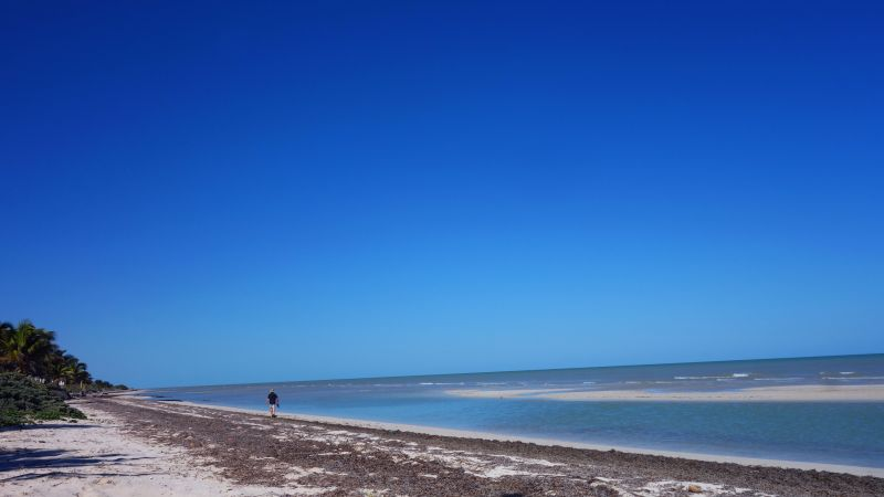DSC04661 Morning Walk on the Beach