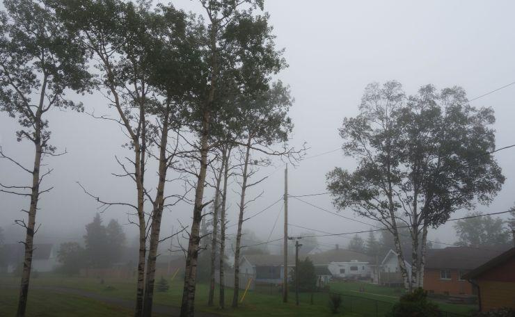 DSC06377 Trees In Fog