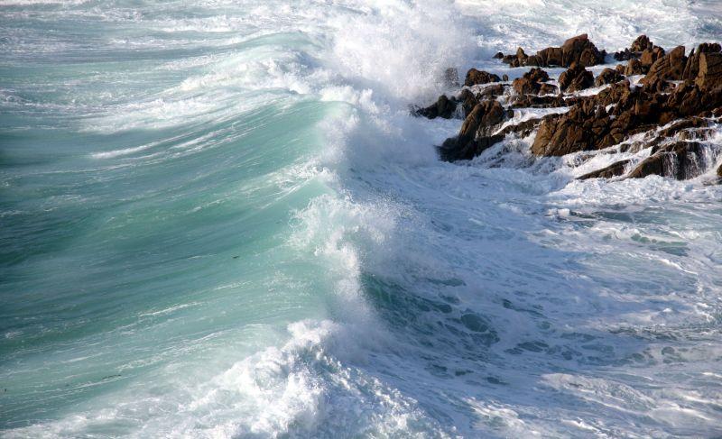 Wild Waves 1