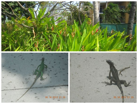 小蜥蜴也来迎客