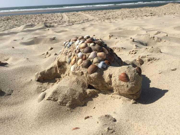 Schildpad strand Nederland