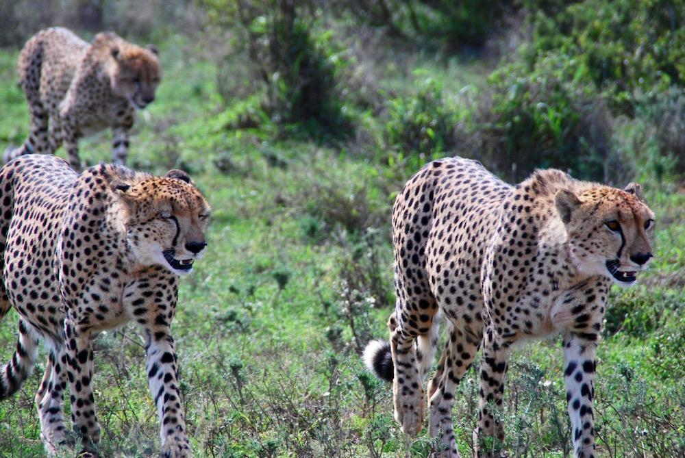 Addo Elephant National Park Zuid-Afrika